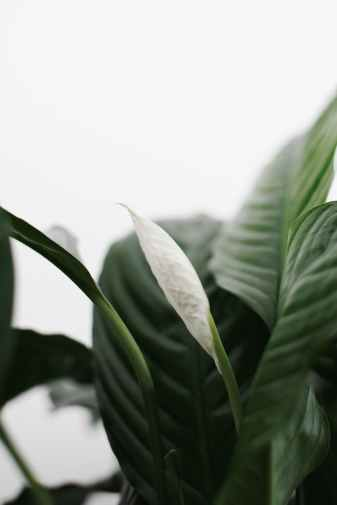 photo of a plant